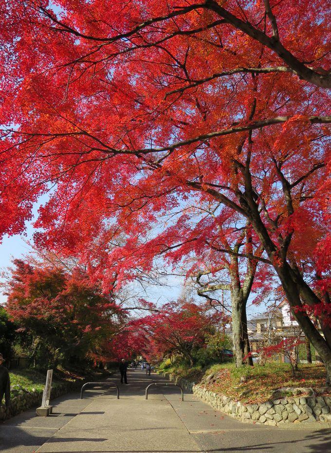 鷺森神社の参道は紅葉のアーケード
