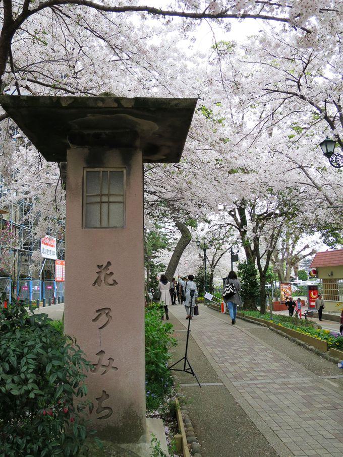 春・桜の時期がお勧め!ロマンティックな「花のみち」