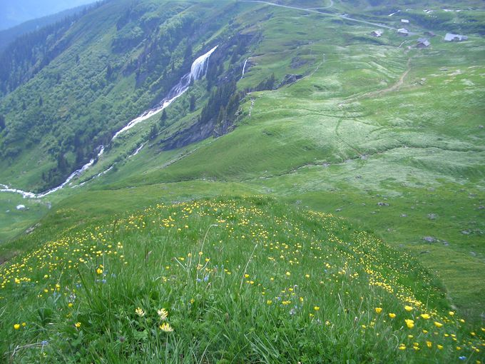 夏は一面花畑!フィルストからボルトへのんびり下りハイキング