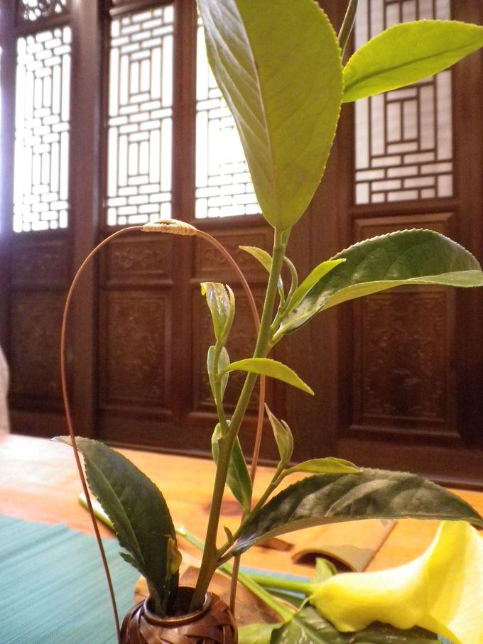 古典的な中華の美