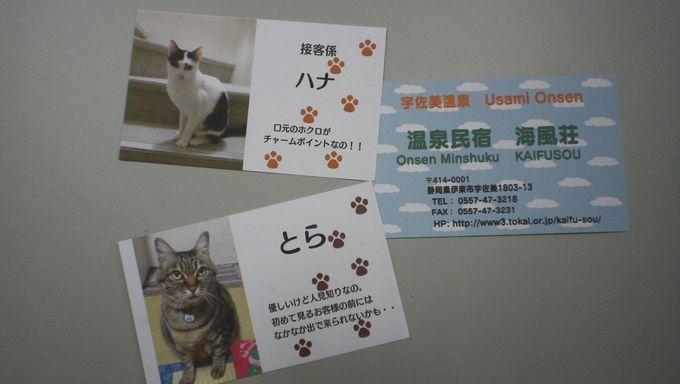 飾られているオブジェや絵なども猫でいっぱい!