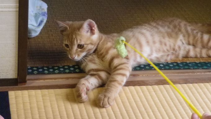 猫と触れ合える民宿
