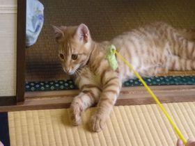 猫と触れ合える温泉宿!静岡・宇佐美「海風荘」へ行こう