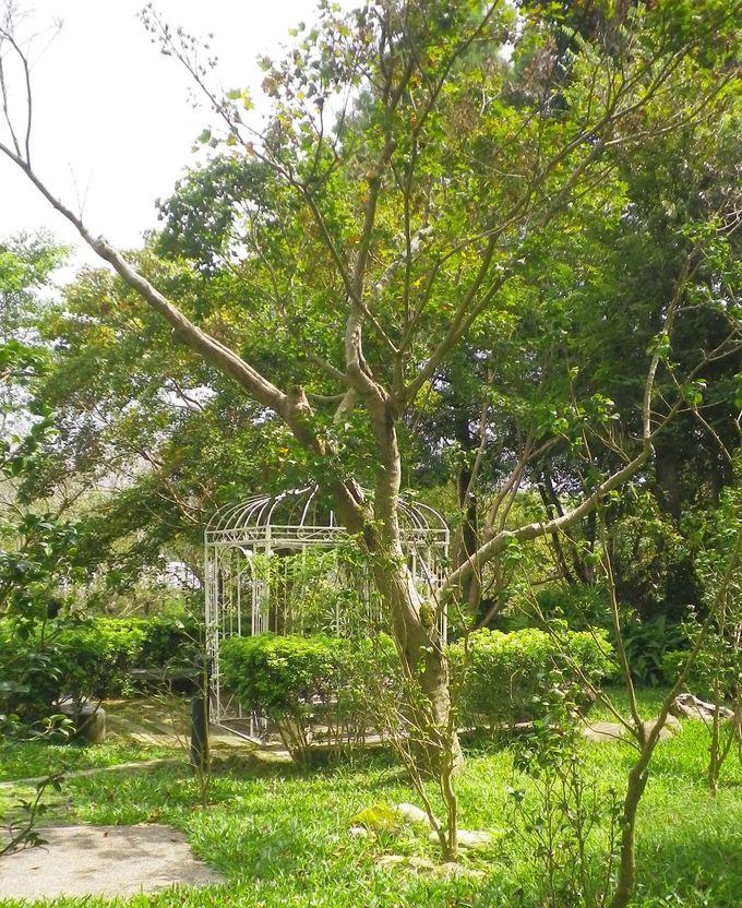 たくさんの木々と植物