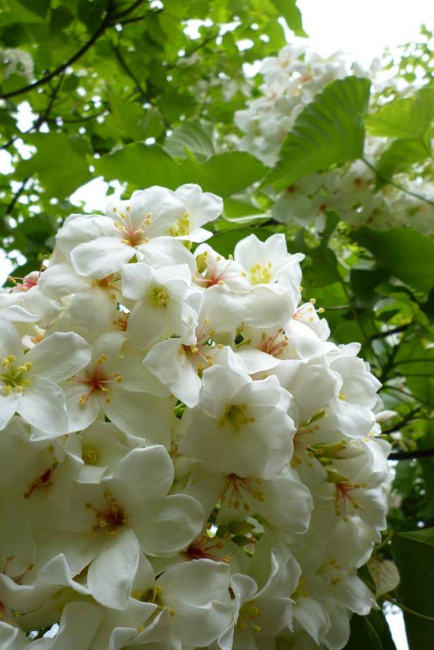 一年中お花が楽しめます!
