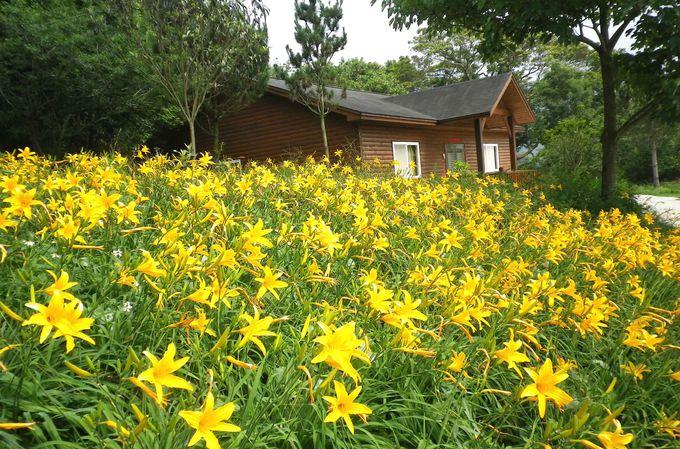 スポットを代表する風景〜金針花
