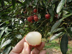 一日農夫体験も!フルーツ狩りが楽しめる台南「仙湖農場」
