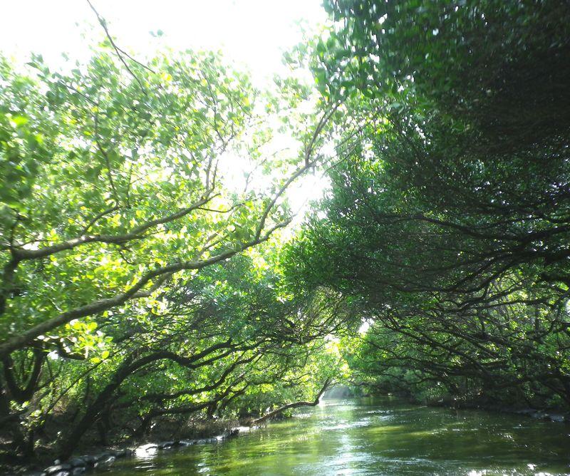 台湾のアマゾン!水上にある緑のトンネル「台江国家公園」