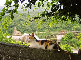 台北猫の村「猴洞」かわいい猫とふれあう旅へ