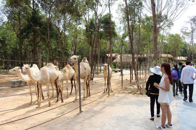 サファリパークに行く前に動物園を楽しむ
