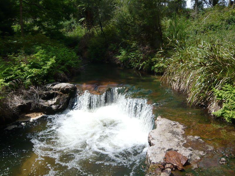 川が全て温泉!?森の中で楽しむNZの「ケロセンクリーク」
