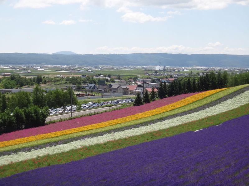 狂い咲きラベンダーロード!見比べたい富良野のアート畑たち!!