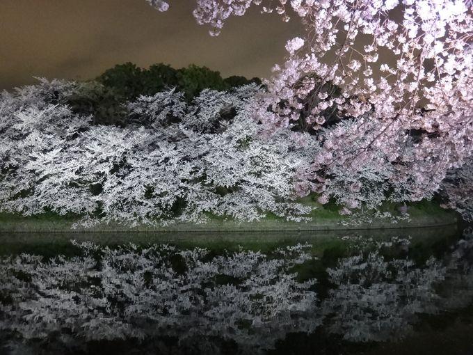 水面に映る、逆さ桜!