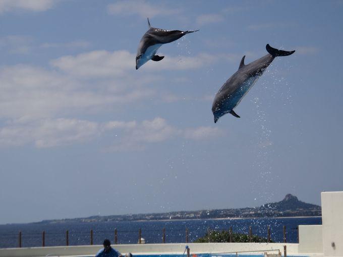 「美ら海水族館」と一緒に観光したい「海洋博公園」
