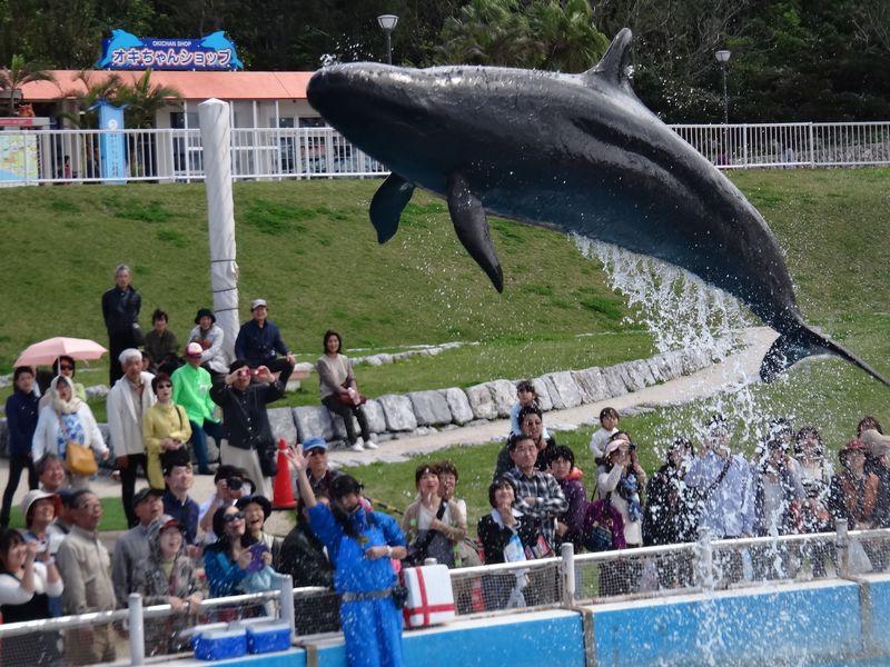 沖縄美ら海水族館を午後からお得に遊ぶ!無料の海洋博公園も満喫♪