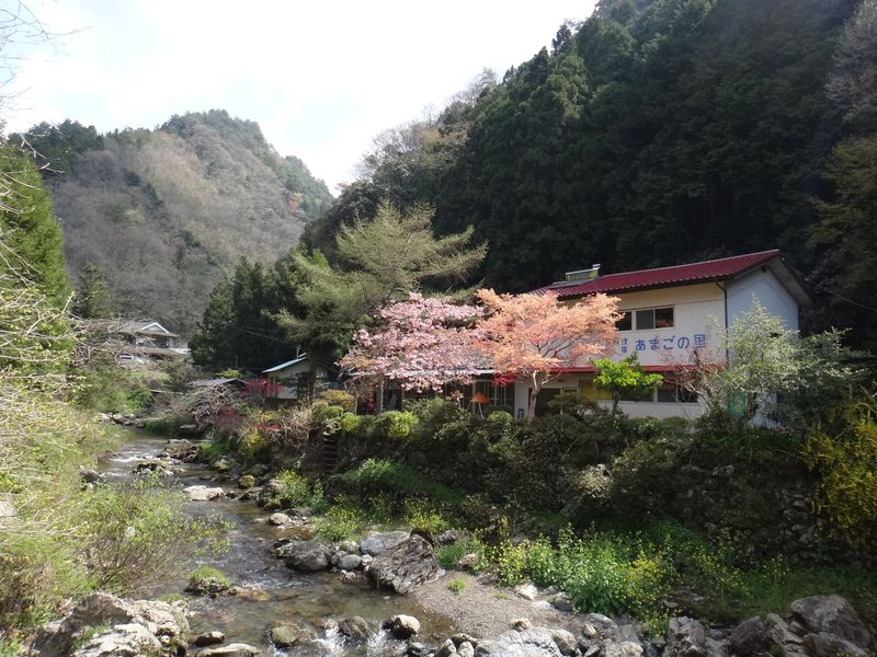 愛媛・山間の宿『あまごの里』で、アマゴ三昧の夕食を!