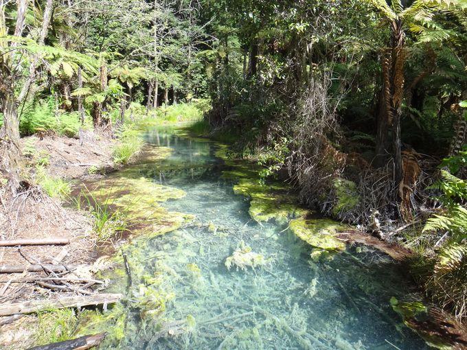 神秘的な水の色の池