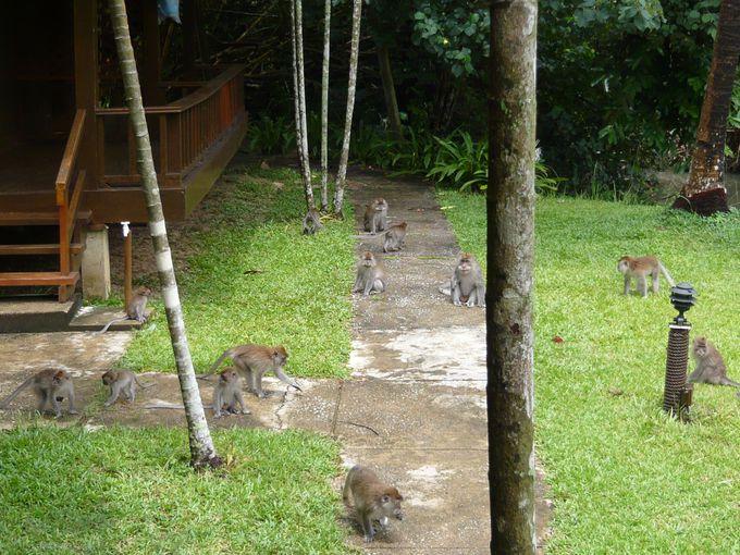 野生の動物がたくさん!