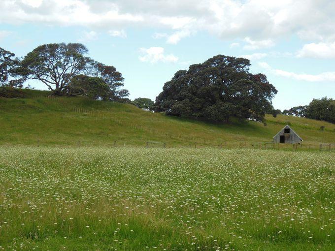 宿の建物の前に広がる草原