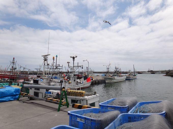 漁港のすぐ隣りだから!