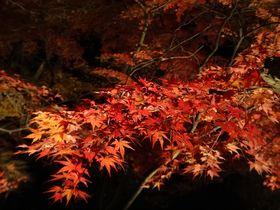 ライトアップ紅葉も!秩父小鹿野温泉旅館「梁山泊」で日本の秋を満喫