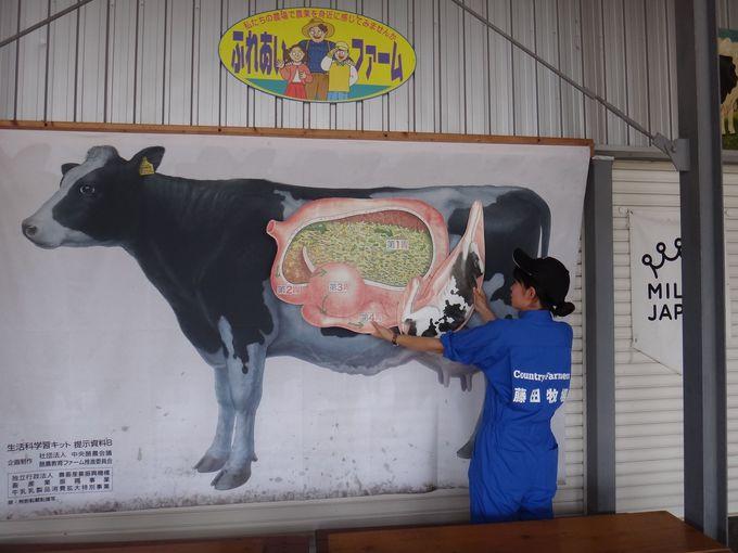 牛について学ぶ!