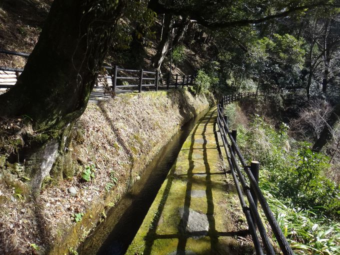竹林や湯道のお散歩