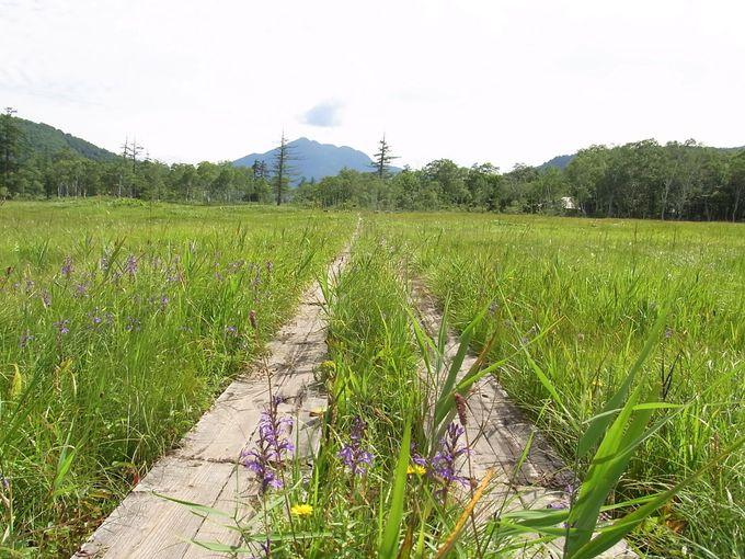 鳩待峠から尾瀬ヶ原へ