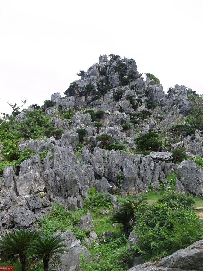 22.「大石林山」地球の息吹