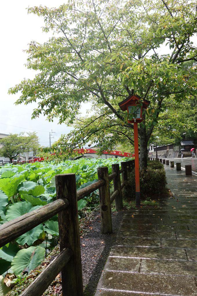 神社への散歩道