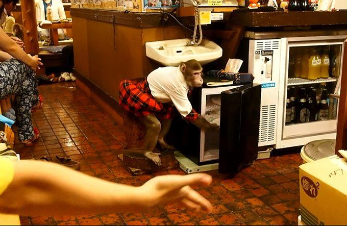 これぞクールジャパン!猿がおもてなしする居酒屋「かやぶき」