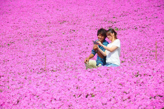 1.「マザー牧場」ピンクの絶景/千葉