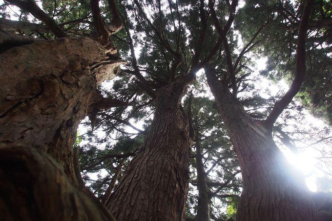 「幻想の森」へは険しい山道を越えて…