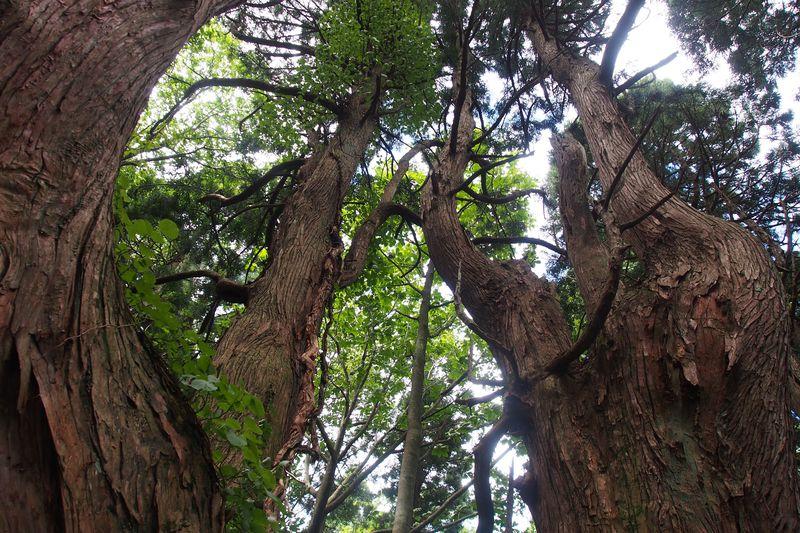 屋久島にも負けない太古の神秘が山形に!戸沢村「幻想の森」