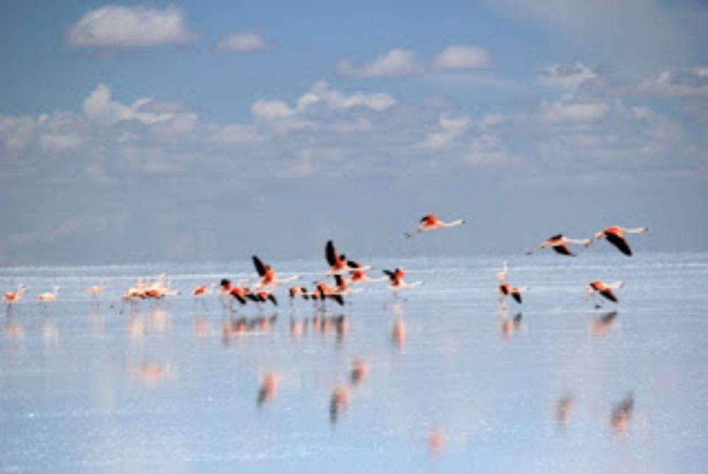 塩湖の生きる動植物に出会う