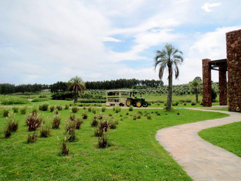 南米のトスカーナ、ウルグアイの農園でオリーブに出会う旅