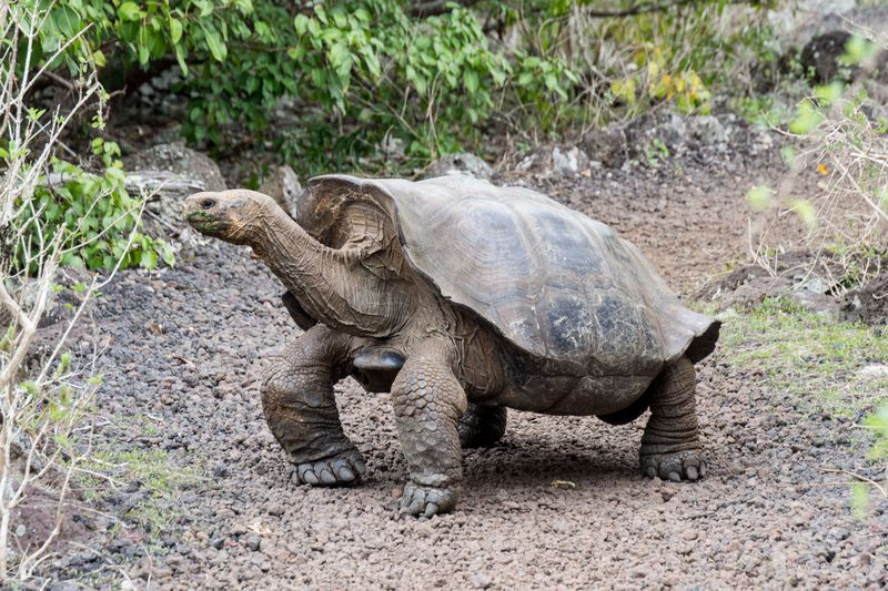 独自の進化を遂げたガラパゴス諸島!楽園にだけ生きる動物達