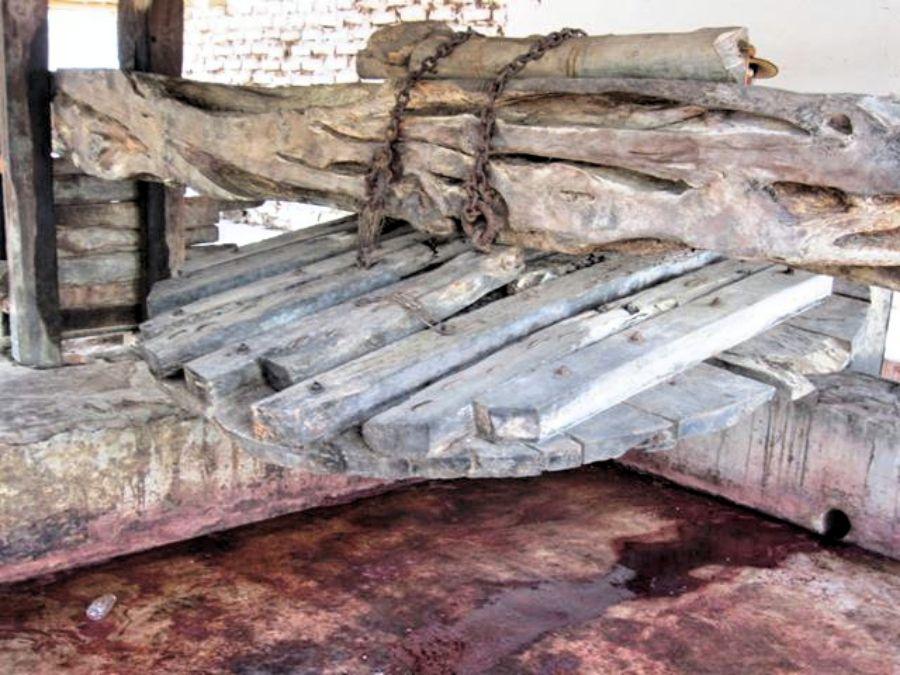 伝統的なピスコ・ワイナリーを訪問