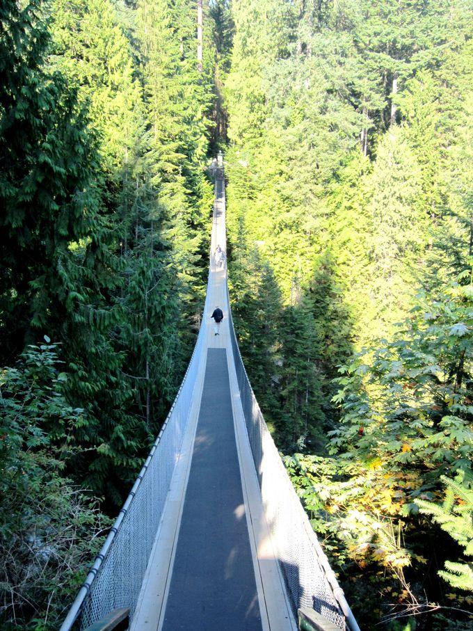 大自然のスリルと森林浴