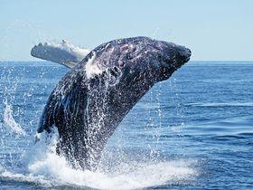 鯨だけじゃない!海流がぶつかるエクアドルの海岸は珍生物の宝庫