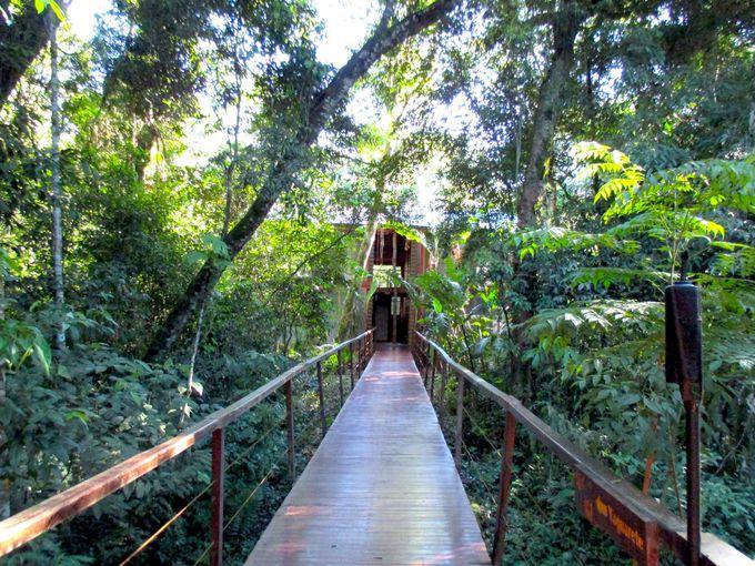 貴重な熱帯植物の生い茂る中にあるロッジ