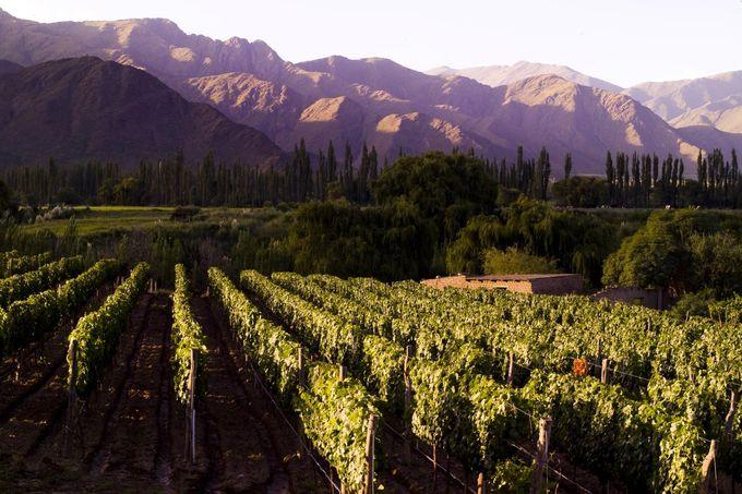 ブドウ栽培に適した土地に、太陽の光が加わって・・・