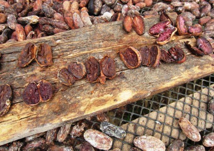 カカオからチョコレート製品までを小さなアトリエで