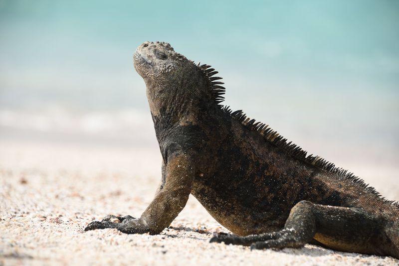 不思議な生き物が一杯!ガラパゴス諸島はクルーズで巡るのがベスト