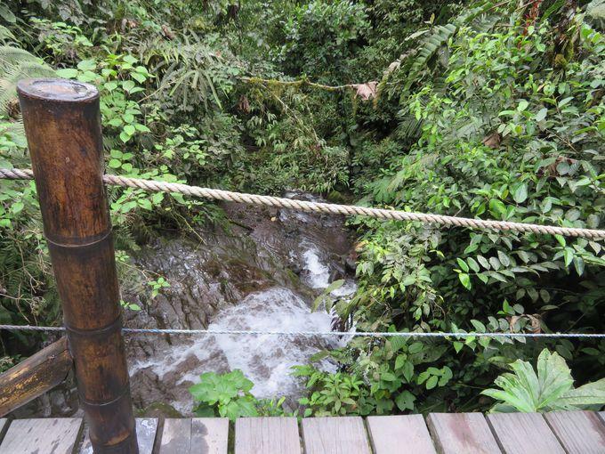 スマコ自然保護区の中を歩く