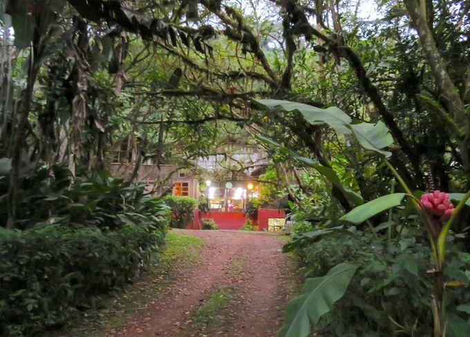 正に森の中の楽園