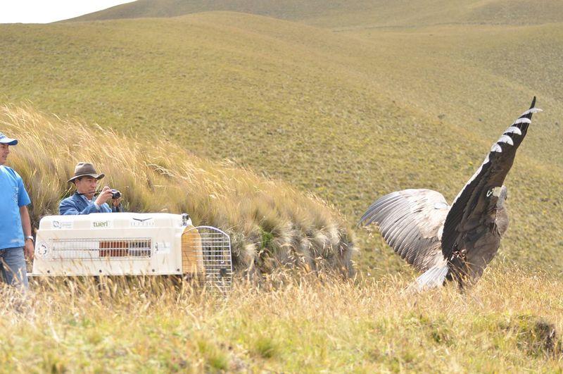 世界最大と最小の鳥も!エクアドル・アンデス「アンティサナ生態保護区」