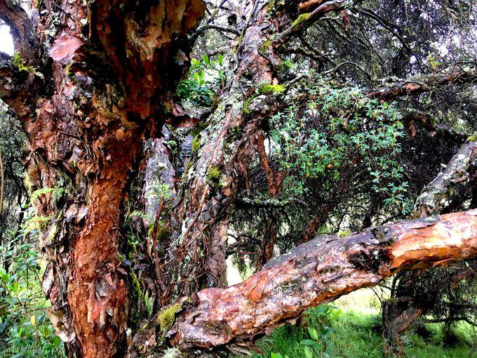 森の中のロッジ、ポリレピスに滞在