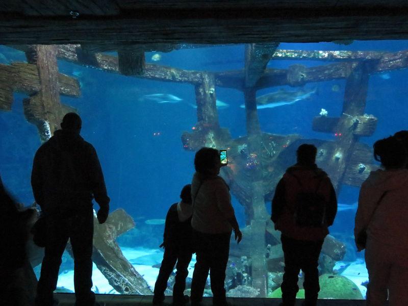 ラスベガス「シャークリーフ水族館」で難破船からサメを観賞