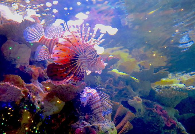 海底神殿エリアのタッチプール
